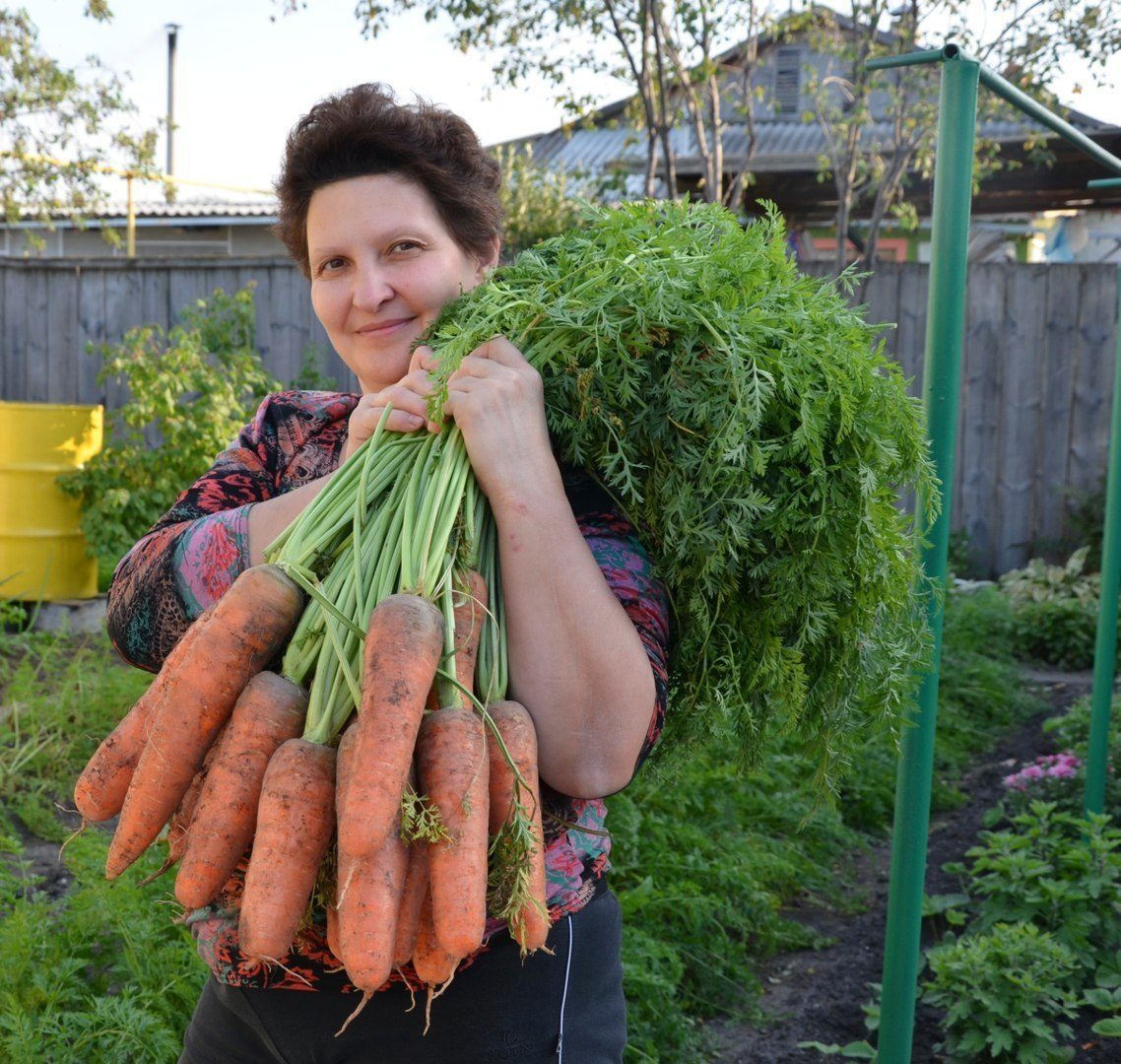Хитрый способ посадки моркови без прореживания обеспечивающий хороший урожай