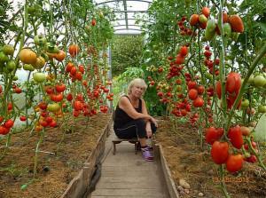 бальзам ДЛЯ РОСТА помидоринок