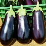 Секреты гарантированного урожая баклажанов
